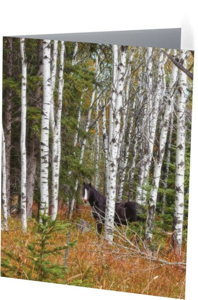 Black and White in Aspen Note Cards and Greeting Cards (25 Pack)