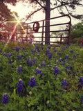 Blue Bonnet Gateway Canvas Print