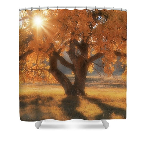 Boxelders Autumn Tree Shower Curtain