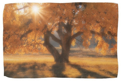 Boxelders Autumn Tree Kitchen Towel