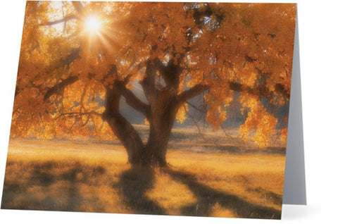 Boxelders Autumn Tree Note Cards and Greeting Cards (25 Pack)