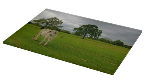 Texas Brahman Mama Cutting Board