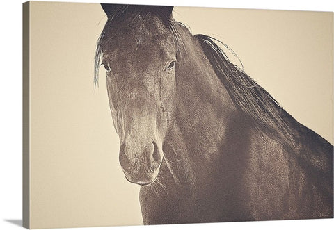 Brazen and Bold Canvas Print