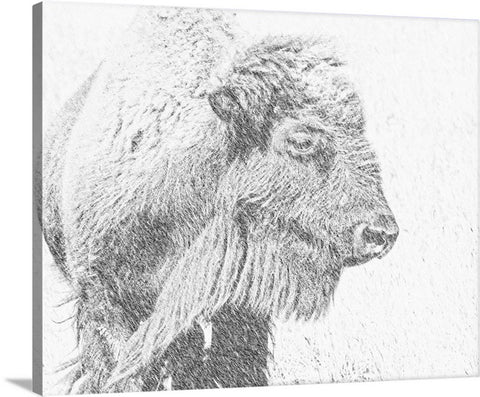 Buffalo Blizzard Canvas Print