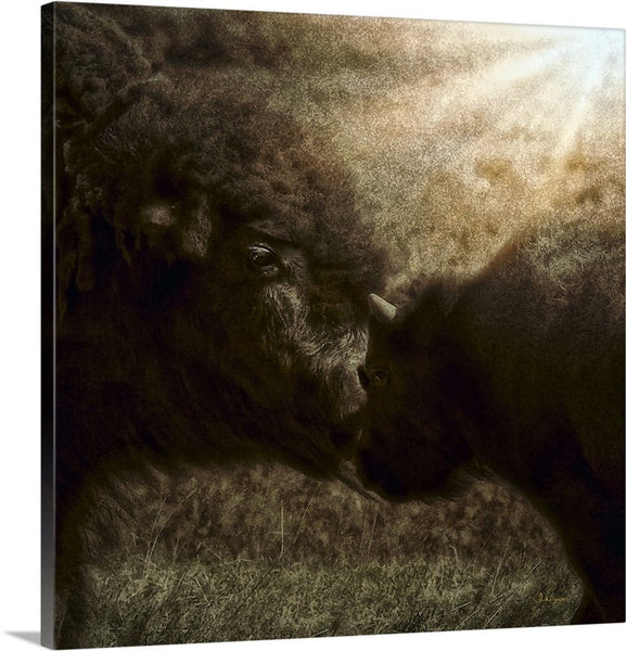 Buffalo Love Canvas Print