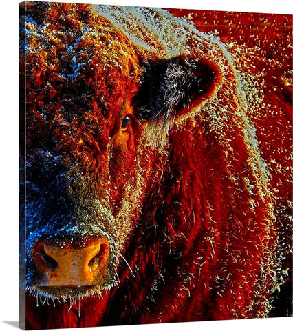Bull On Ice Canvas Print