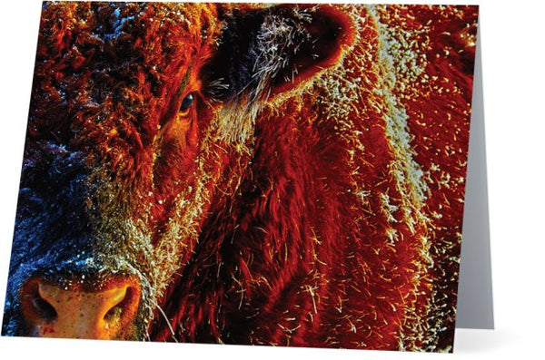 Bull On Ice Note Cards and Greeting Cards (25 Pack)