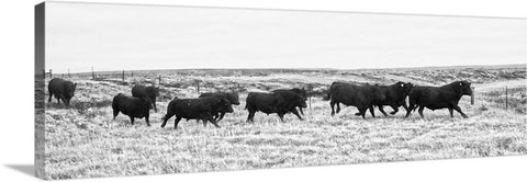Bulls on the Run Canvas Print