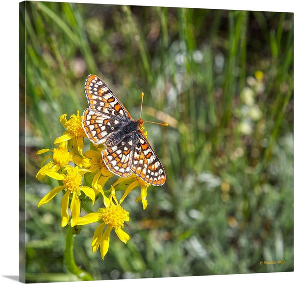 Butterfly in Aspen Canvas Print