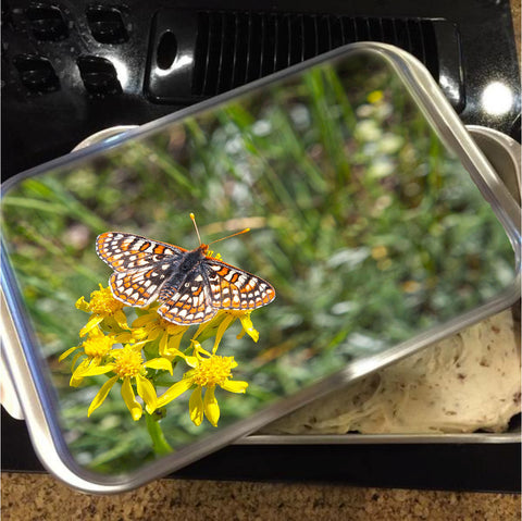 Butterfly in Aspen Cake Pan with Lid