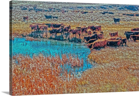 Cattails, Cattle And Sage Canvas Print
