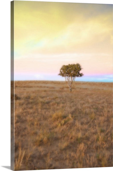 Cedar Tree at Sunset Canvas Print