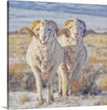 Double the Ram Power Canvas Print