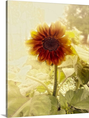 Dusty Retro Sunflower Canvas Print