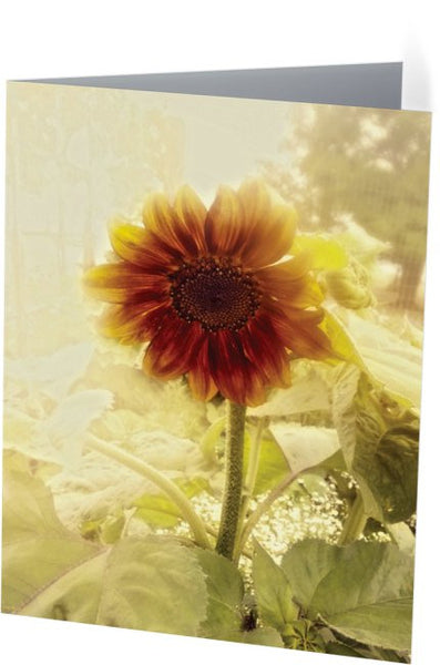 Dusty Retro Sunflower Note Cards and Greeting Cards (25 Pack)
