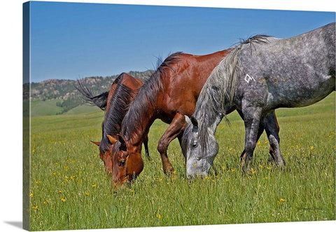 Grass Grazing Time Canvas Print