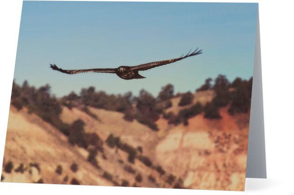Have You Never Seen A Hawk on The Wing Note Cards and Greeting Cards (25 Pack)