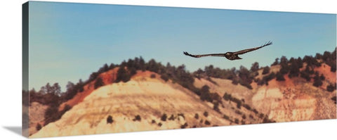 Have You Never Seen a Hawk on the Wing Canvas Print