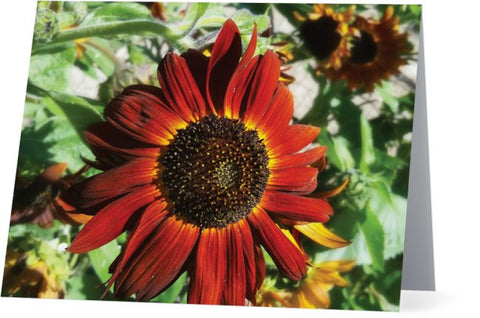 Hearts on Fire Sunflower Note Cards and Greeting Cards (12 Pack)