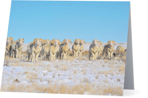 Line Em Up Rams Note Cards and Greeting Cards (12 Pack)