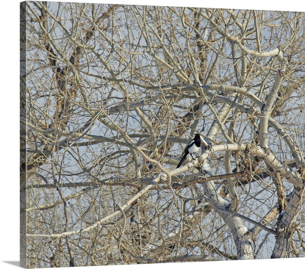 I Spy a Magpie Canvas Print