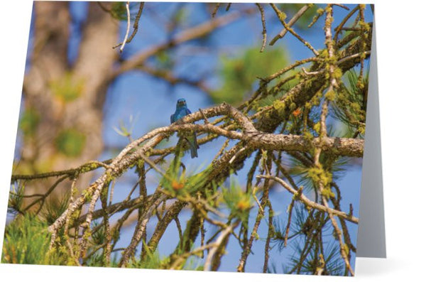 Mountain Bluebird Note Cards and Greeting Cards (12 Pack)
