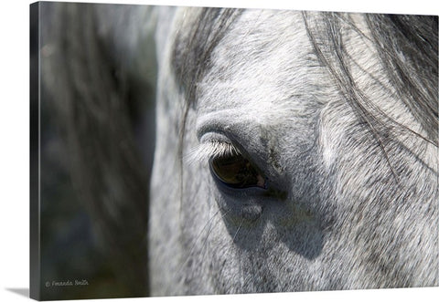 Ousted's Eye Canvas Print