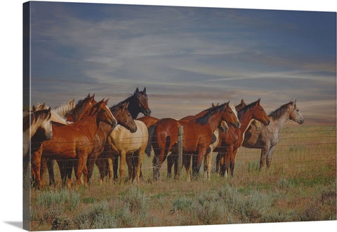 Over The Fenceline Canvas Print