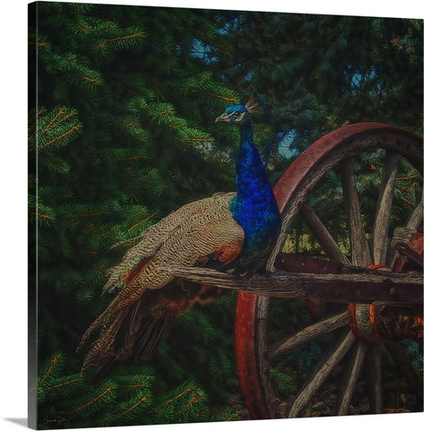 Peacock Vantage Canvas Print