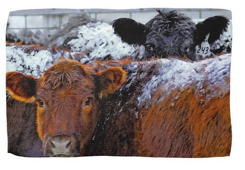 Peek A Boo Heifers Kitchen Towel