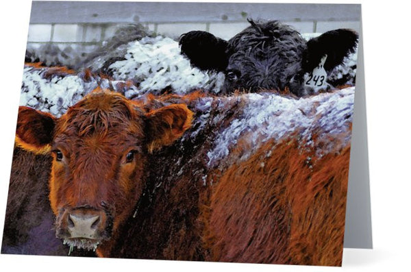 Peek a Boo Heifers Note Cards and Greeting Cards (12 Pack)
