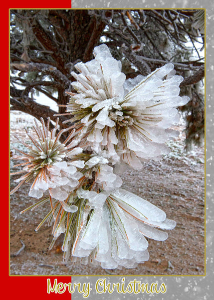 Pine Needles and Ice Western Art Greeting Card for Christmas