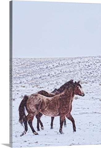 Prancing in the Snow Canvas Print