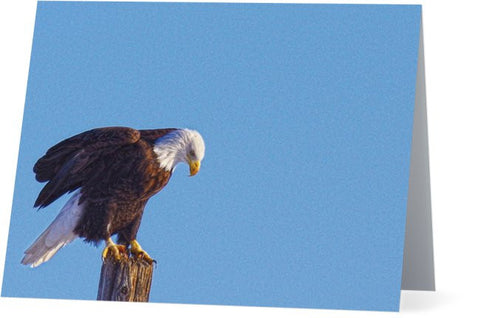 Preparing for Patriotic Flight Note Cards and Greeting Cards (25 Pack)