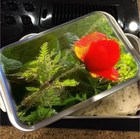 Red Poppy at Sunset Cake Pan with Lid