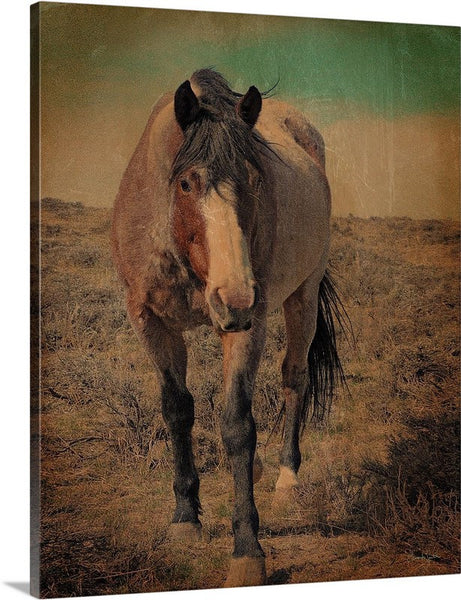 Red Roan and Sage Brush Canvas Print