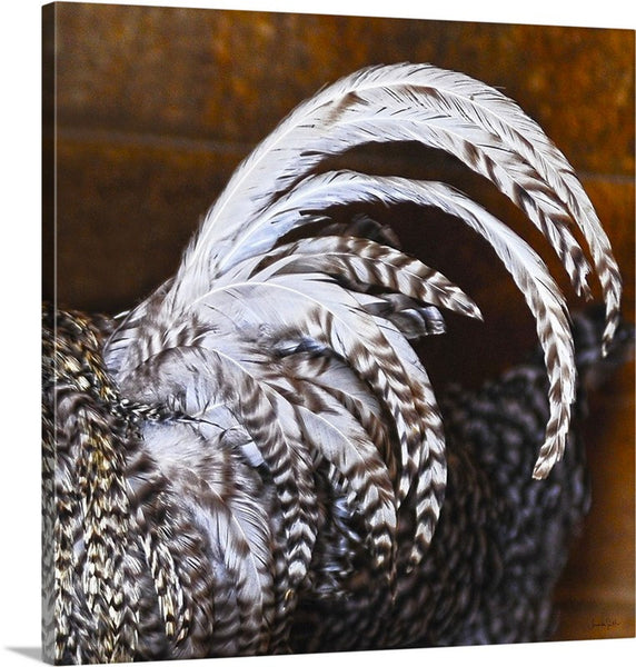 Rooster's Tail Canvas Print