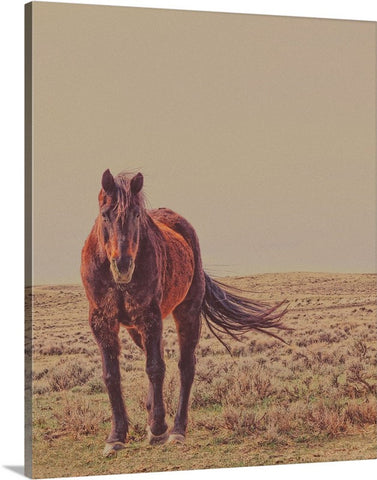 Rust and Prairie Wise Canvas Print