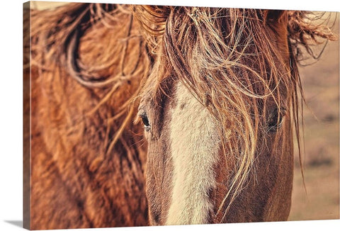 Rustic Eyes Canvas Print