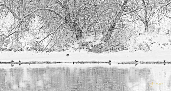 Winter Scene on the Platte River Canvas Print