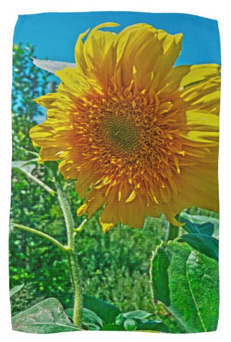 Candy Tuft Sunflower Kitchen Towel