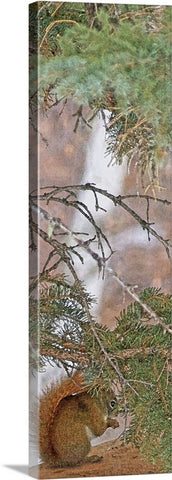 Squirrel, Pine Tree and a Nut Canvas Print