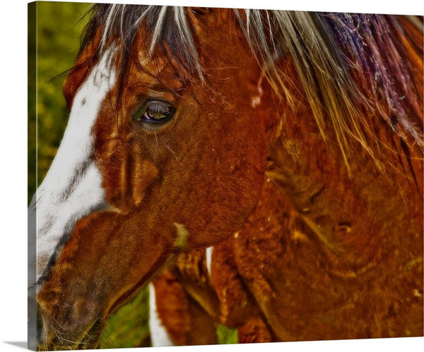 Summer Mare Canvas Print