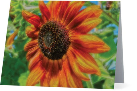 Sun Shower Sunflower Note Cards and Greeting Cards (25 Pack)