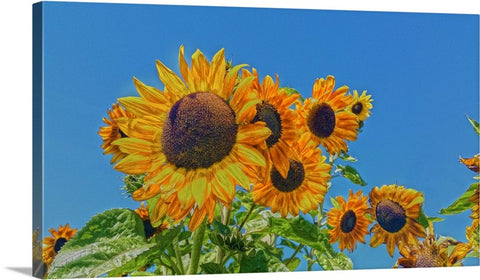 Sun and Flower Conversation Canvas Print