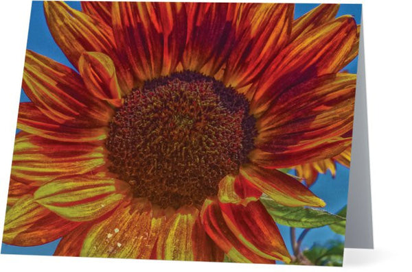 Sunflower Bonnet Note Cards and Greeting Cards (12 Pack)