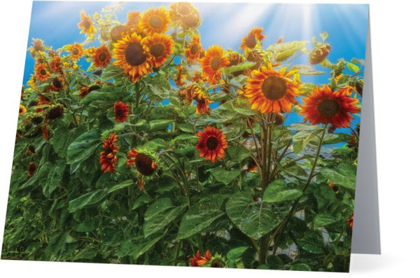 Sunflower Pack Note Cards and Greeting Cards (25 Pack)