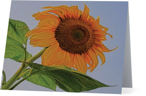 Sunflower Wild Note Cards and Greeting Cards (25 Pack)