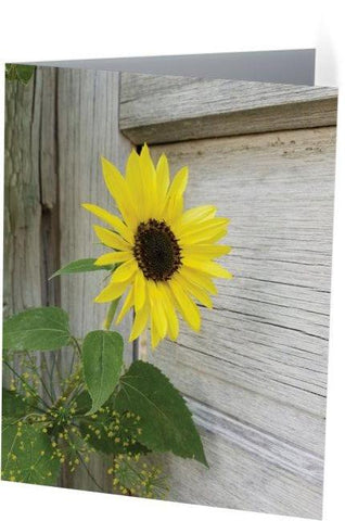 Sunflower and Dill Note Cards and Greeting Cards (25 Pack)