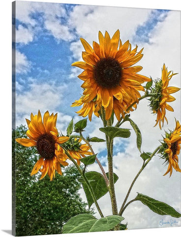 Sunflowers and Blue Canvas Print